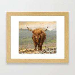 Highland Moo Framed Art Print