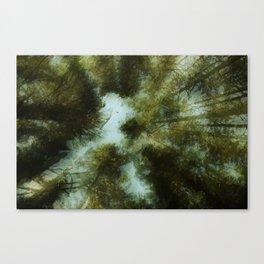 Grace Beneath The Pines Canvas Print