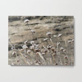 wildflowers seaside in pearl color Metal Print