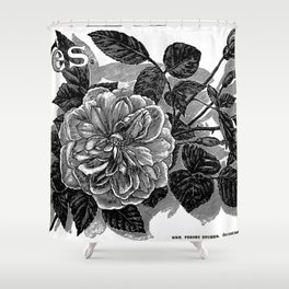 Roses 1894 Shower Curtain