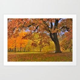Fall at Larz Anderson Art Print