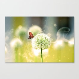 Allium fantasy flowers with butterfly Canvas Print