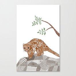 Quoll Canvas Print