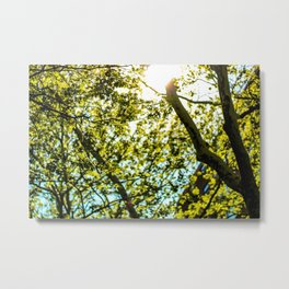 Sunshine in Astoria Metal Print