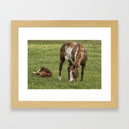 Itchy Leg Framed Art Print