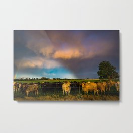 Bovine Shine - Cattle Gather on Stormy Day in Kansas Metal Print