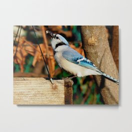 """""""Yes, I can eat suet!"""" Metal Print"""