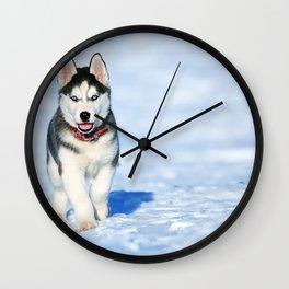 Siberian Husky pup Wall Clock