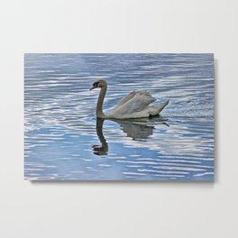 Proud mute swan Metal Print