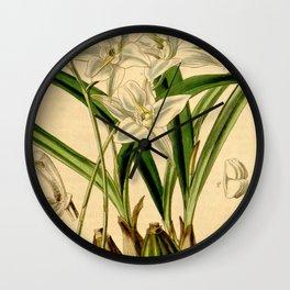 Laelia albida Curtis' 68 (N.S. 15) pl. 3957 (1842) Wall Clock