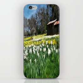 Daffodils and Barn iPhone Skin