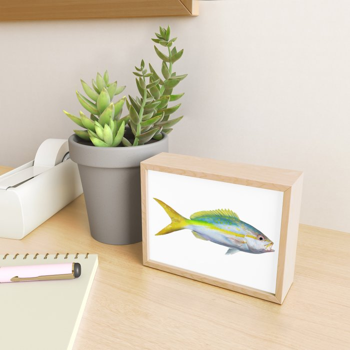 Yellowtail Snapper Framed Mini Art Print by catchanything