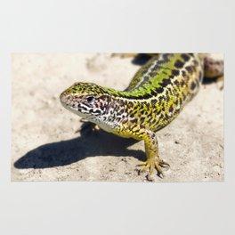 Lizard photo nature photography reptile photo Rug