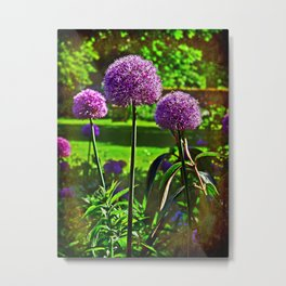 Purple Allium Spheres Metal Print