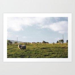 Lonely sheep Art Print