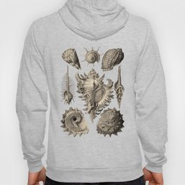 Ernst Haeckel Prosobranchia Sea Shells Hoody