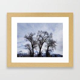 Winter Mountain Trees Framed Art Print