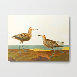 Long-legged Sandpiper Bird Metal Print