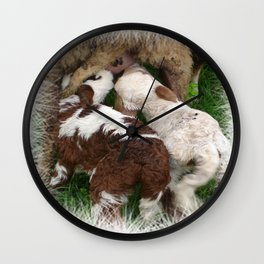 Twin Lambs Suckling From Their Mother Wall Clock
