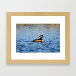 Hooded Merganser Drake Framed Art Print