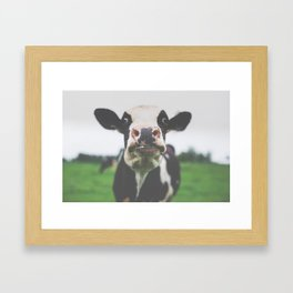 Funny Cow Photography print Framed Art Print