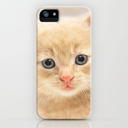 Ginger Kitten iPhone Case