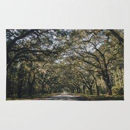 Wormsloe Live Oak Avenue - Savannah II Rug