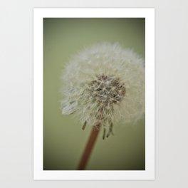 Dandelion (1) Art Print