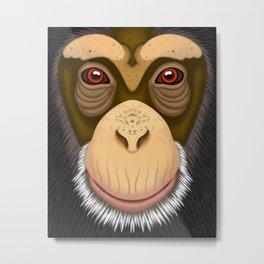 Old Chimpanzee Metal Print