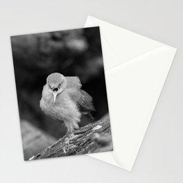 Bird - Furnarius Angry Stationery Cards
