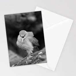 Bird - Furnarius Angry Stationery Cards