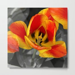 Tulip Macro  Metal Print