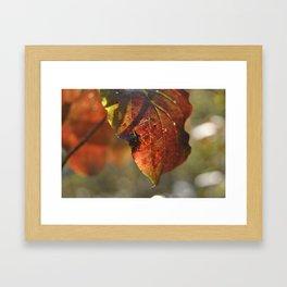 autumn red leaf Framed Art Print