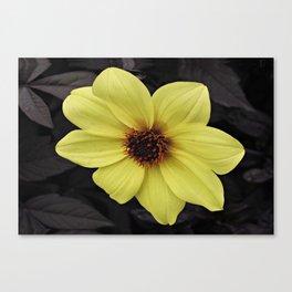 Dark Leaf Dahlia Canvas Print