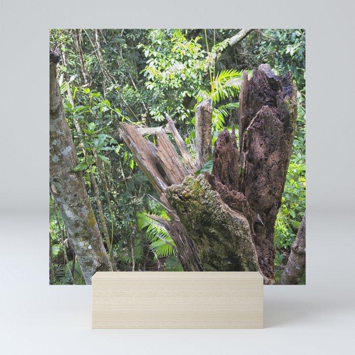 A cyclone damaged tree in the rain forest Mini Art Print