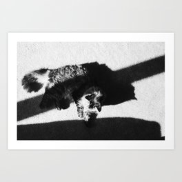 Aesthetic Black And White Cat Art Print