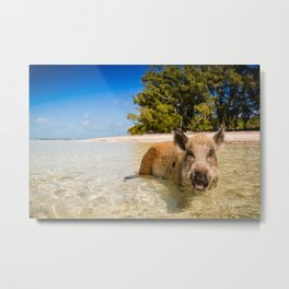 Pig in Bahamas Metal Print