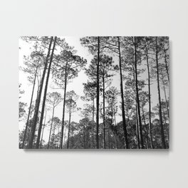 Lined Up Metal Print