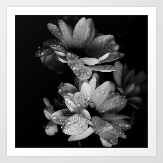Flower and drops. Black and white. Art Print