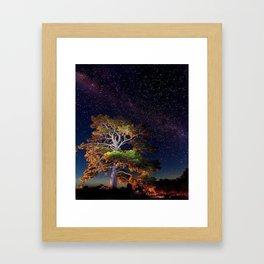 Stars and A Tree Framed Art Print