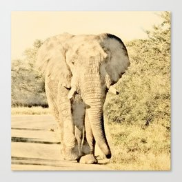 Vintage Animals - Elephant Canvas Print