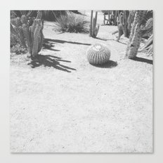 Cacti - in Black & White Canvas Print
