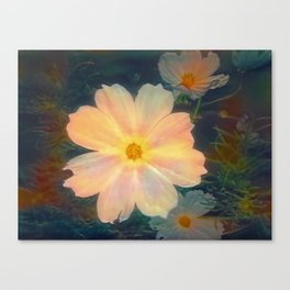 White flower kosmeya Canvas Print