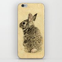 rabbit iPhone & iPod Skins featuring Rabbit by Anna Shell