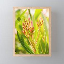 Nature photography Flower bud bloom II Framed Mini Art Print