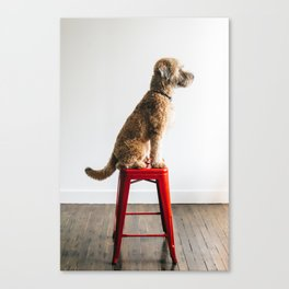 Soft-Coated Wheaten Terrier Canvas Print