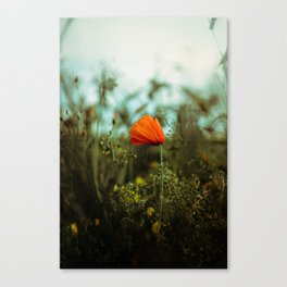 Sunday Late Summer Memories Canvas Print
