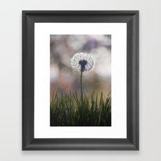 dandelion....i wish Framed Art Print