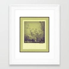 Birch: Early Spring Framed Art Print