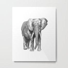 Mr Elephant. Metal Print